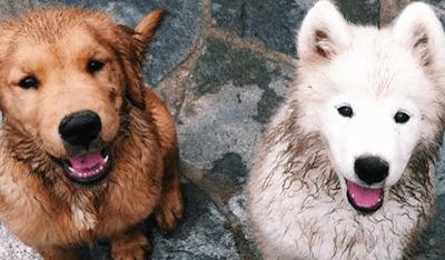 puppy-speeldagen